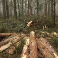Hoe bomenkap in Nederland tot miljoenenverlies leidt